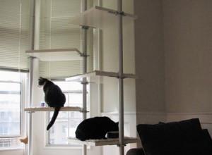 Фотография кошачьего уголка на лоджии