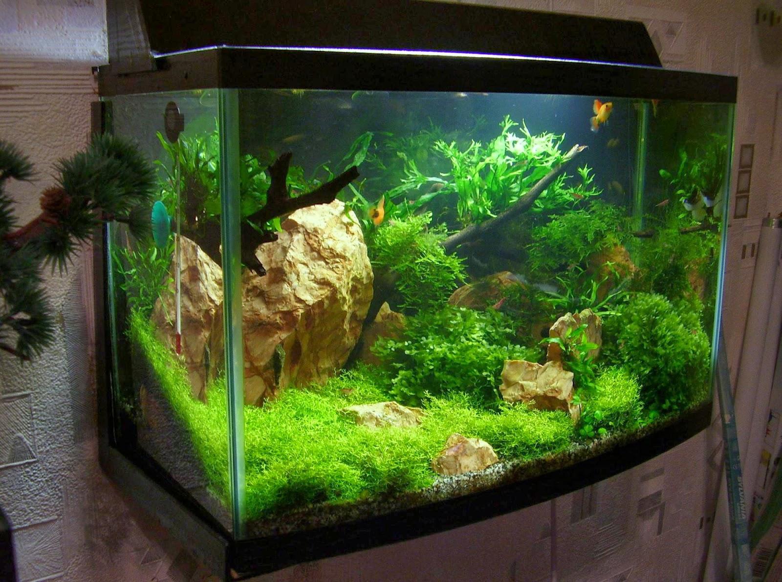 Герметик для аквариума – виды и назначение