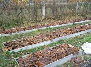 Укрытие листвой