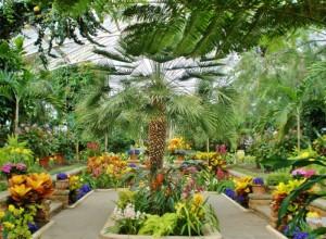 Тропический зимний сад, livejournal.com