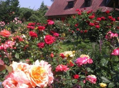 Фотография пейзажного розария